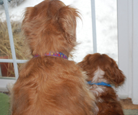 dogs looking out the window