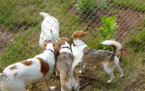 Dog conclave