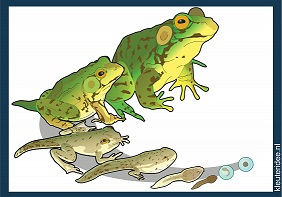 Frog-Life-Cycle-small.jpg